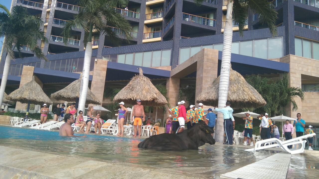 Vaca en piscina del hotel zuana notiagro for Follando en la piscina del hotel
