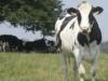 Desempeño reproductivo de bovinos. 10 recomendaciones