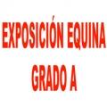 Exposición Equina Grado A