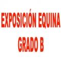 Exposición Equina Grado B